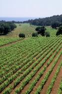Clos Mireille Vineyards