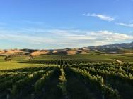 Awatere Vineyard