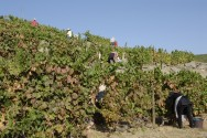Bom Retiro Vineyards