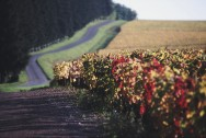 Domaine Faiveley Mercurey Vineyards