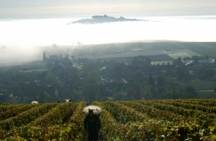 2014 Harvest at Pascal Jolivet