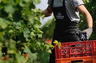 2014 Harvest in Valpolicella