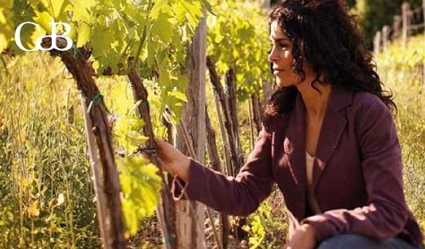 2014 Harvest Report from Castiglion del Bosco