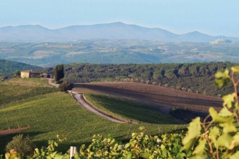 Castiglion del Bosco move towards Organics