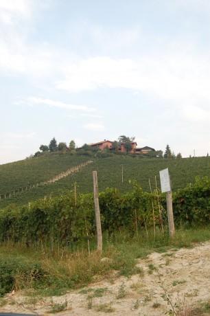Pio Cesare 'Il Bricco' in Decanter Top 20