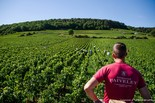 2018 Harvest Report – Domaine Faiveley
