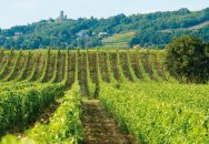 Delas Frères Domaine des Grands Chemins Vineyard