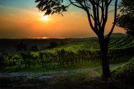 La Groletta vineyard