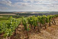 Chablis Les Clos Vineyard