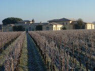 Petrus vines in winter