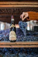 Amarone in the Fruttaio