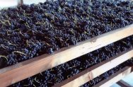 Amarone grape drying Process