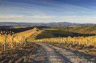Landscape Autumn Capanna Vineyard