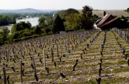 Pouilly Fume Vineyards