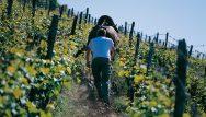 Horse in the vineyard