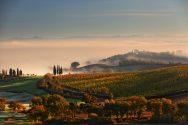 Vigneto Gauggiole Vineyard Autumn