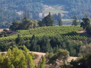 Quartet is nestled in Mendocino County's cool, fog-shrouded Anderson Valley