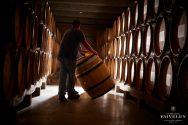 Cellar - Barrels