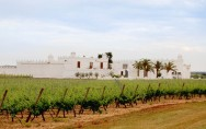 The Masseria and vineyards