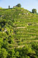 Delas Frères Clos Boucher Vineyard