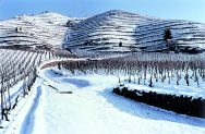 Snow in Delas Frères Vineyards