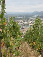 Delas Frères Vines Overlooking the Rhône Valley