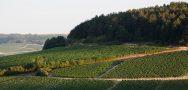 Chablis Les Blanchots Vineyard