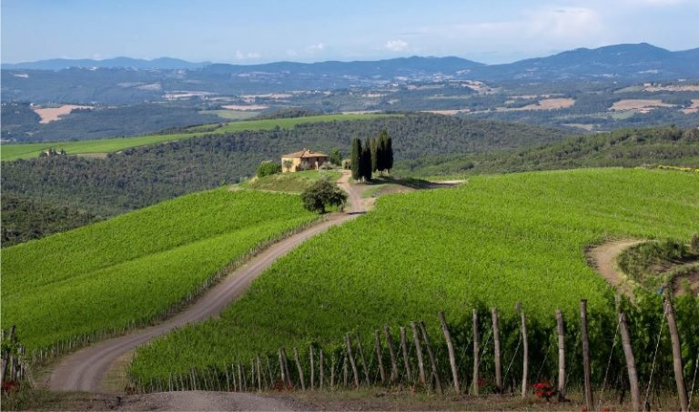 New Release: Brunello di Montalcino DOCG 2014 – Vibrancy and Silky Tannins