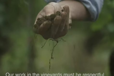 Champagne Louis Roederer releases its official video