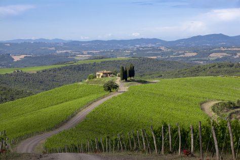 Brunello di Montalcino DOCG 2015 – An unforgettable Vintage!